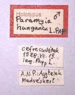 Image of Phyllomyzinae