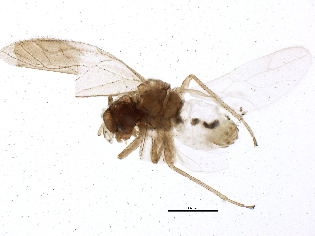 Image of Valenzuela
