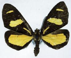 Image of Ctimene