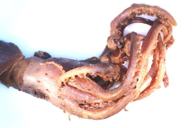 Image of Histioteuthidae Verrill 1881