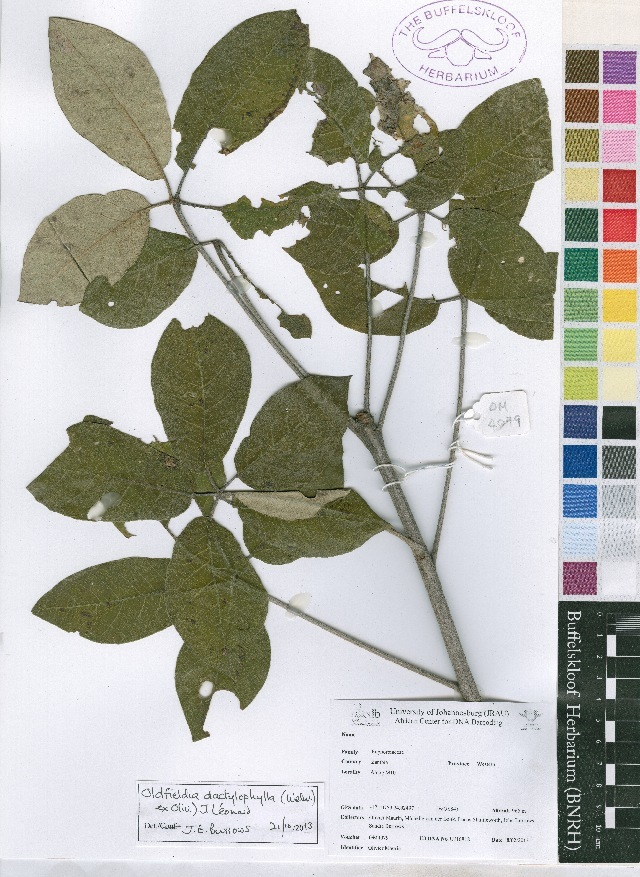 Image of Picrodendraceae