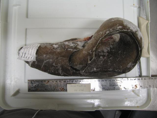 Image of cusk