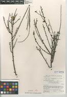 Image of Broom