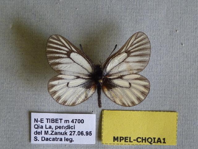 539.shibu mpel chqia1 1375129662 jpg
