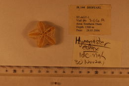 Image of Hymenaster