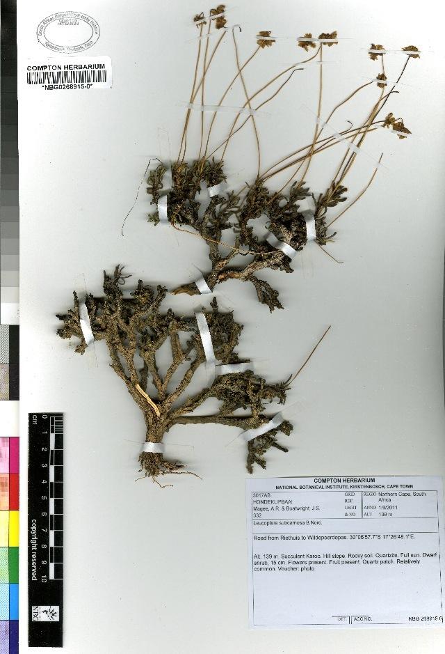 Image of Leucoptera