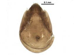 Image of Tegoribatidae