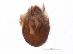 Image of Autogneta