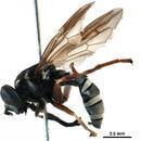 539.sspac bioug07835 h10 1455221004 jpg.130x130