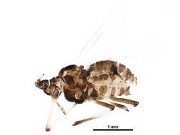 539.sspea bioug20327 e04 1454382900 jpg.260x190