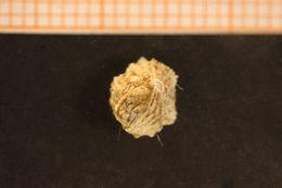 Image of wart barnacle