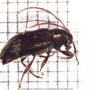 Image of Oopsis