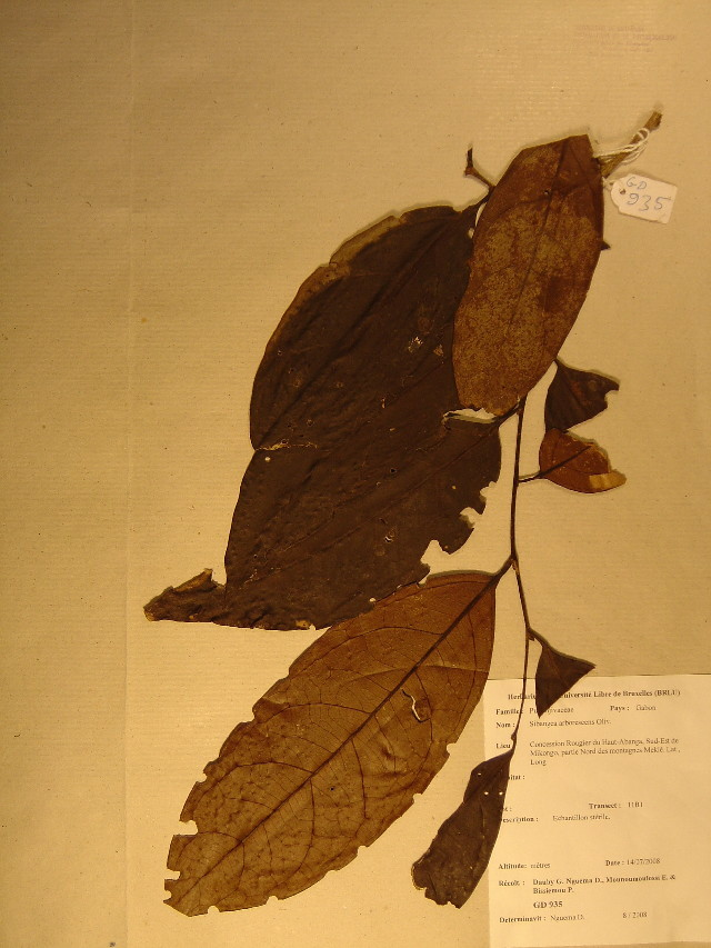 Image of Putranjivaceae
