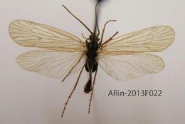 539.trifi arin 2013f022 1386561214 jpg.260x190