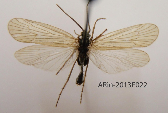 539.trifi arin 2013f022 1386561214 jpg