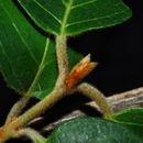 539.tsa om2038 combretum microphyllum 2 1223049154 jpg.130x130