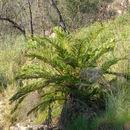 Image of tree ferns