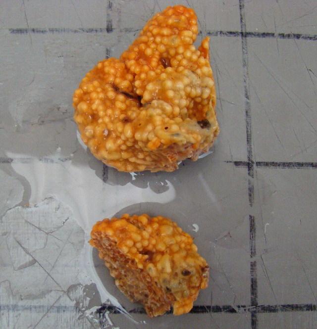 Image of Trididemnum