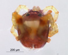 Image of Aturus