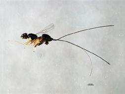 Image of Apocrypta