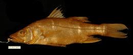 Image of Chucumite