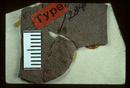 Image of <i>Prokalotermes hagenii</i> (Scudder 1883)