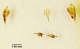 Image of <i>Zethus simulans</i> Bohart & Stange 1965