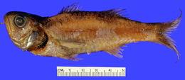 Image of Keelcheek Bass