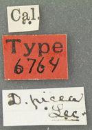 Image of <i>Dacne</i> (<i>Xenodacne</i>) <i>picea</i> Le Conte 1875