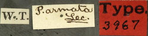 Image of <i>Pachyta armata</i> Le Conte 1873
