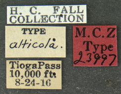 Image of <i><i>Crenitis</i></i> (Crenitis) <i>alticola</i> (Fall 1924)