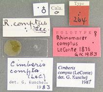 Image of <i>Cimberis compta</i> (LeConte 1876)
