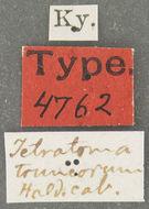 Image of <i><i>Tetratoma</i></i> (Tetratoma) <i>truncorum</i> Le Conte 1866