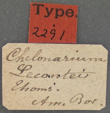 Image of <i>Chelonarium lecontei</i> Thomson 1867