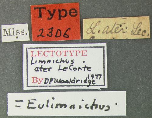 Image of <i>Eulimnichus ater</i> (Le Conte 1854)