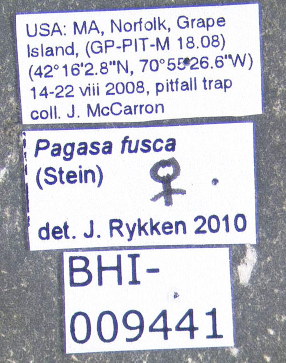 Image of <i>Pagasa</i> (<i>Lampropagasa</i>) <i>fusca</i> (Stein 1857)