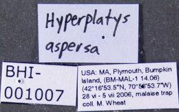 Image of <i>Hyperplatys aspersa</i> (Say 1824)