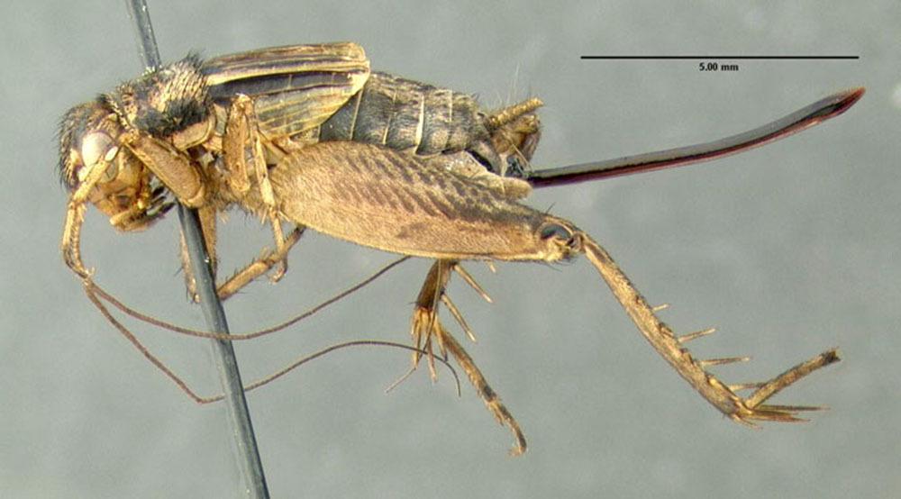 Image of Allard's Ground Cricket