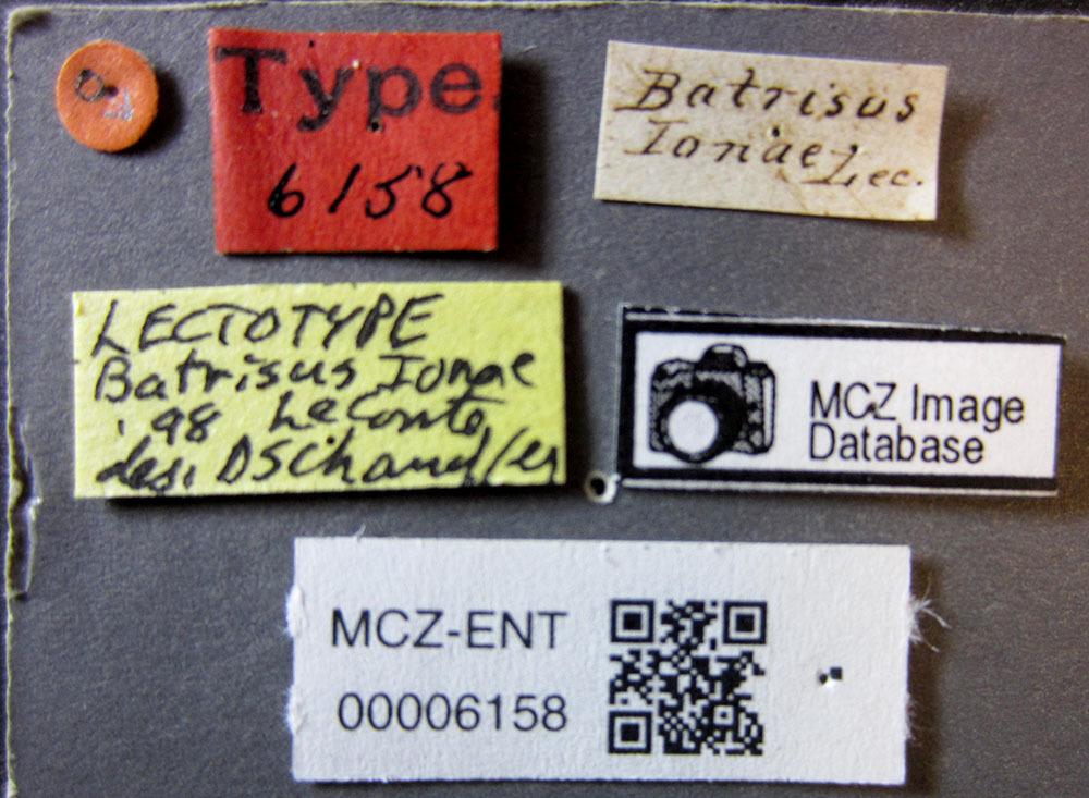 Image of <i>Batrisodes</i> (<i>Elytrodes</i>) <i>ionae</i> (Le Conte & J. L. 1849)