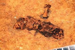 Image of <i>Odynerus percontusus</i> Cockerell
