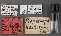Image of <i>Psephenops haitianus</i> Darlington 1936