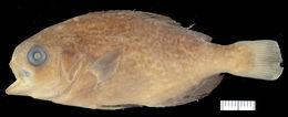 Image of barrelfish