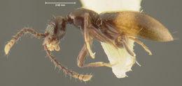Image of <i>Acanthinus darlingtoni</i> Werner 1967