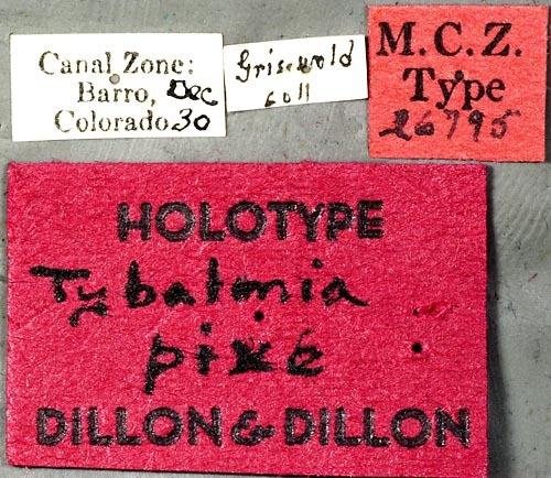 Image of <i>Tybalmia pixe</i> Dillon & Dillon 1945