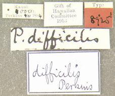 Image of <i>Proterhinus difficilis</i> Perkins 1900