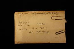 Image of <i>Idmonea californica</i> d'Orbigny 1853