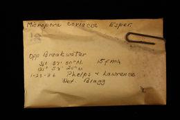 Image of <i>Micropora coriacea</i> (Johnston 1847)