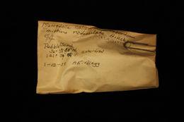 Image of <i>Smittina reticulata</i>
