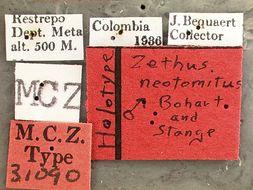 Image of <i>Zethus neotomitus</i> Bohart & Stange 1965