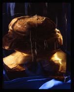 Image of Goliath frog